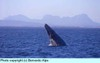 Sanignaciograywhale